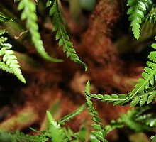 Tree Fern Centre by Leah Weiss