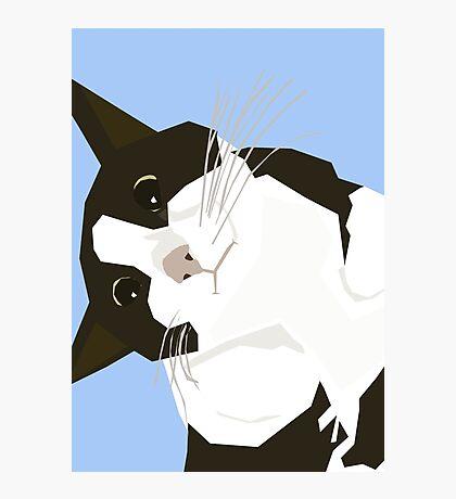 Hello Cat Photographic Print