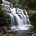 Liffey Falls by Sonya Byrne