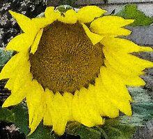 Sunflower by silvergator