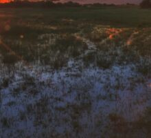 Reflecting on a Duba Plains sunset Sticker
