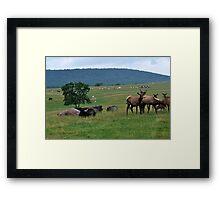 The Safari Framed Print
