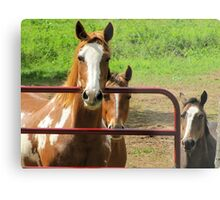 The Thinking Horses Metal Print
