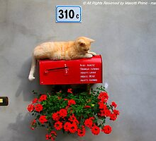 various shades of red - My cat Johannes controls .. Post .. Missano - (Zocca Modena Italy)_1048- by primo masotti