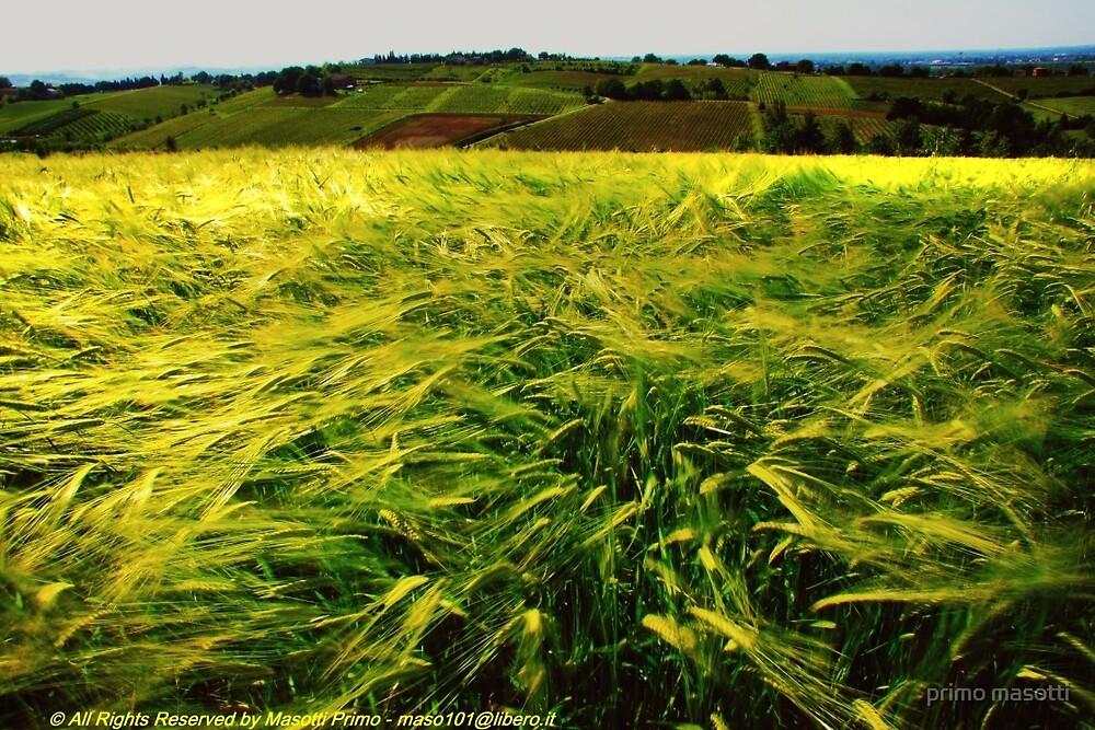 Il Vento e il Grano ( The Wind and the Wheat) - Montebudello - ( Monteveglio Bologna Italy ) -_1515- by primo masotti