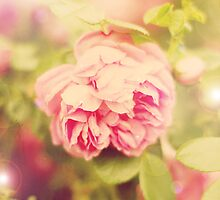 English Rose by Helen Rushbrook