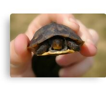 Tiny Turtle Oil Canvas Print