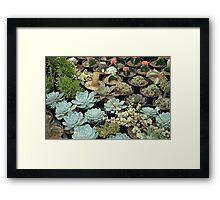 cactus Framed Print