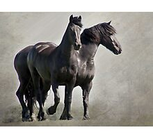 Two Friends Photographic Print
