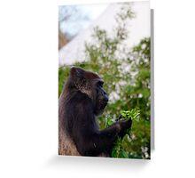 Western Lowland Gorilla eating Greeting Card