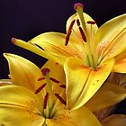 Spring time lillies by sue shaw