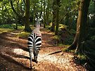 English Zebra by Simon Groves