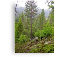 yosemite wild 2 Canvas Print