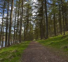 Woodland Path, Ladybower Reservoir by Nick Atkin