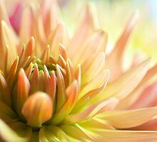 Dahlia in pastel shades by Stevel