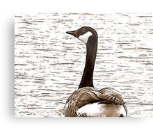 Glimpse From A Gander Metal Print