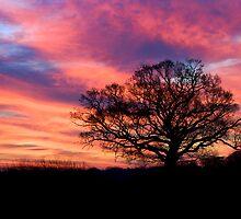 Oak Tree at Dawn by Stevel