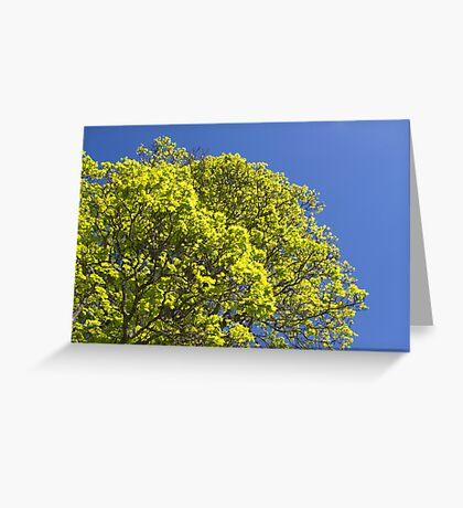 A Maple Dream Greeting Card