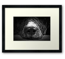 Big Sniffer Framed Print