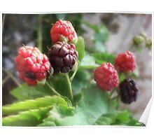 Raspberries 1 Poster