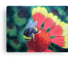 Bee On Coreopsis Canvas Print