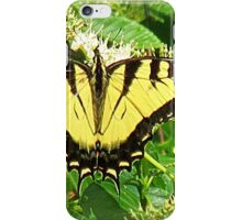Eastern Tiger Swallowtail In Silky Dogwood Tree iPhone Case/Skin