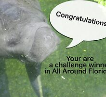 All Around Florida Banner Challenge by ValeriesGallery