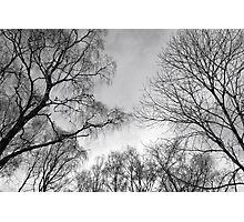Look Up Photographic Print