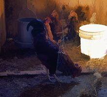 The Bucket  by Skye Ryan-Evans