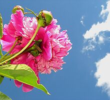 Bug's Eye-view Of A Peony by Stephen Thomas