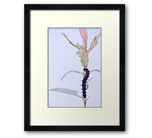 Gypsy Moth Larva on Willow Branch Framed Print