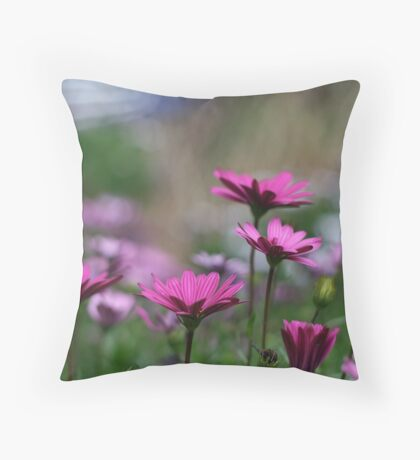 Purple african daisies Throw Pillow