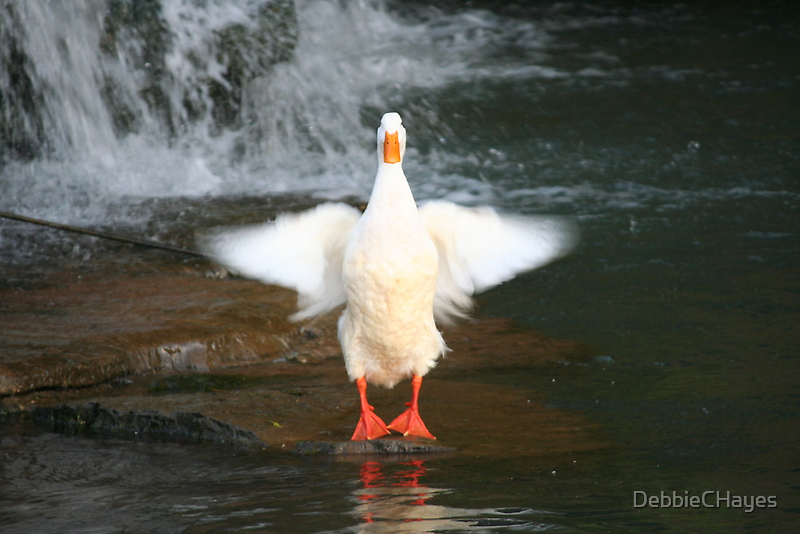 Fly Away........ or Not by DebbieCHayes