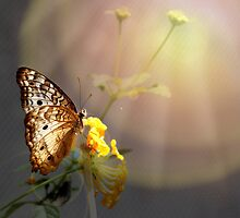 Butterfly Glow by Judy Vincent