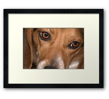 Beagle Eyes Framed Print