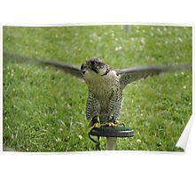 Birds of Prey show Poster