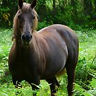 horse in a meadow by tego53