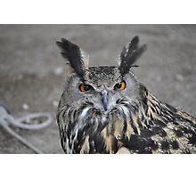 Birds of Prey show Photographic Print