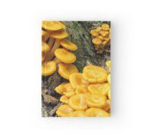 Omphalotus olearius Hardcover Journal