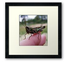 my grasshopper friend. Framed Print