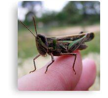 my grasshopper friend. Canvas Print