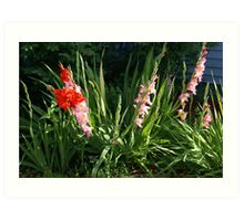 Glads in front yard Art Print