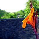 Profile In Orange by Sandra Moore