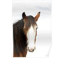 Clydesdale Mare Poster
