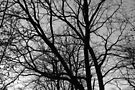 Silhouetted Winter Branches by Artberry