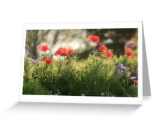 Ethereal Poppies Greeting Card