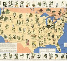 Amazing map of 'Herbal Cures' from 1932 by 42designs