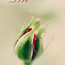 Love by Kimberly Palmer