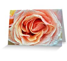 Touch of Peach Greeting Card