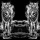 Sixteen Legs Of Zebras by miroslava